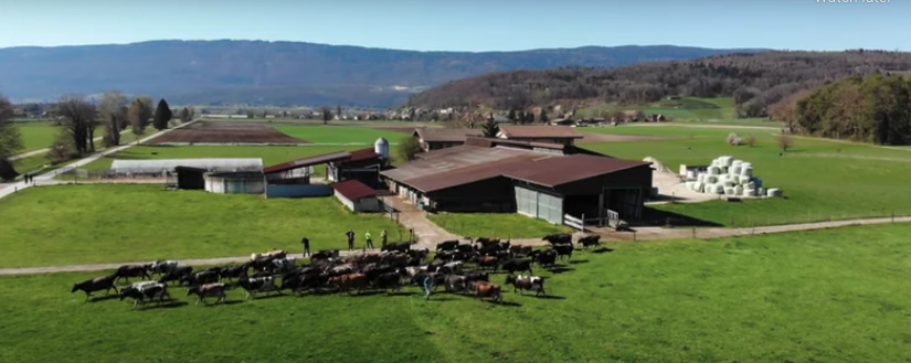 kach_pitt_switzerland_farm_kiwicross